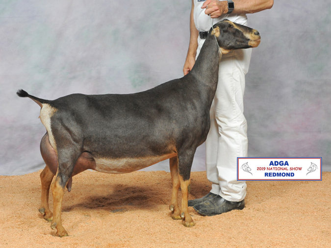 2019 LaMancha National Show Results