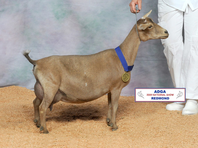 2019 Nigerian Dwarf National Show Results