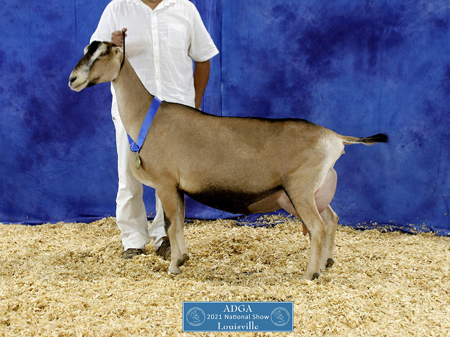 2021 Recorded Grade National Show Results