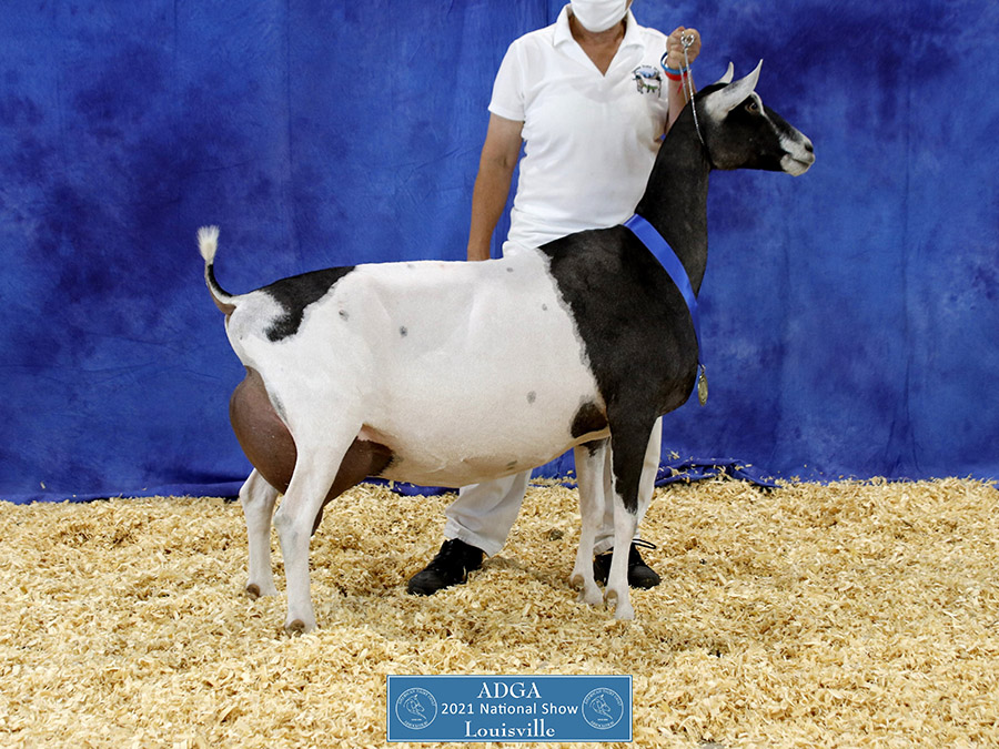 2021 Sable National Show Results