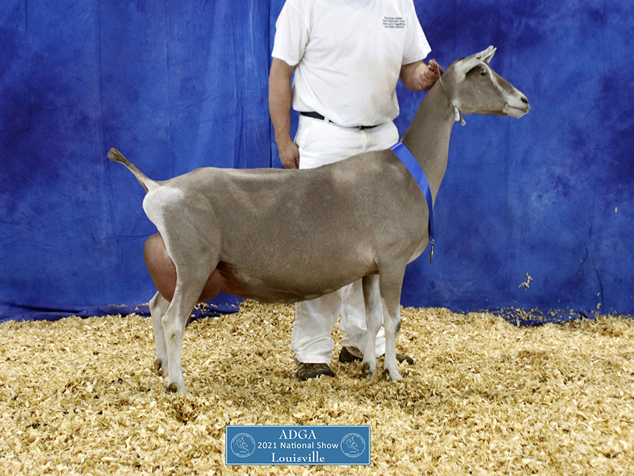 2021 Toggenburg National Show Results